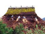 かやぶき屋根の葺き替え