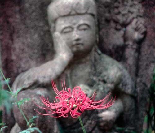 石仏と彼岸花