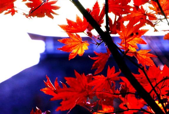 長野県戸隠神社
