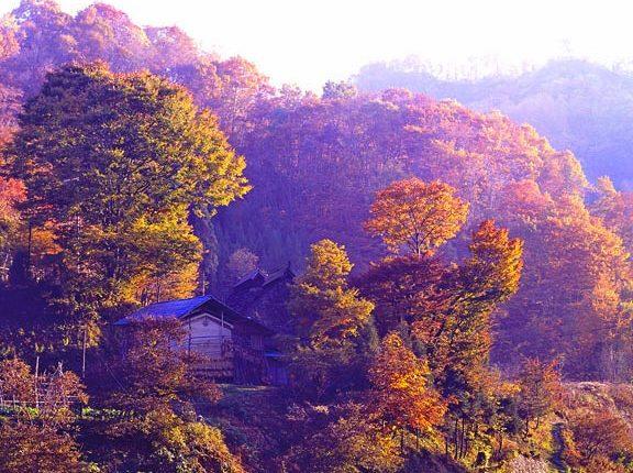 秋色のかやぶき屋根