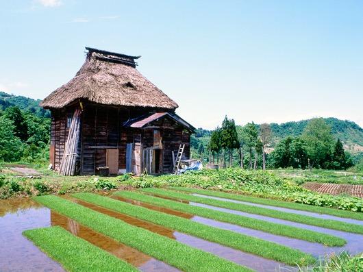 新潟県松之山のかやぶき屋根の家