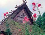 かやぶき屋根と百合の花
