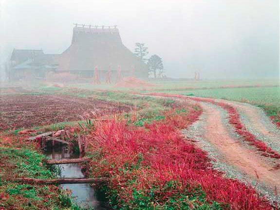 美山町の草紅葉